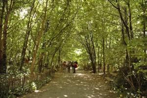 jardin-insolite-paris-jardin-naturel
